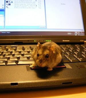 Blogging Hamster